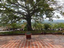 Wer beeindruckt mehr - der Baum oder die Statue?